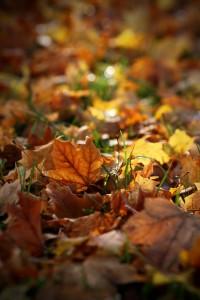 Fall 5834